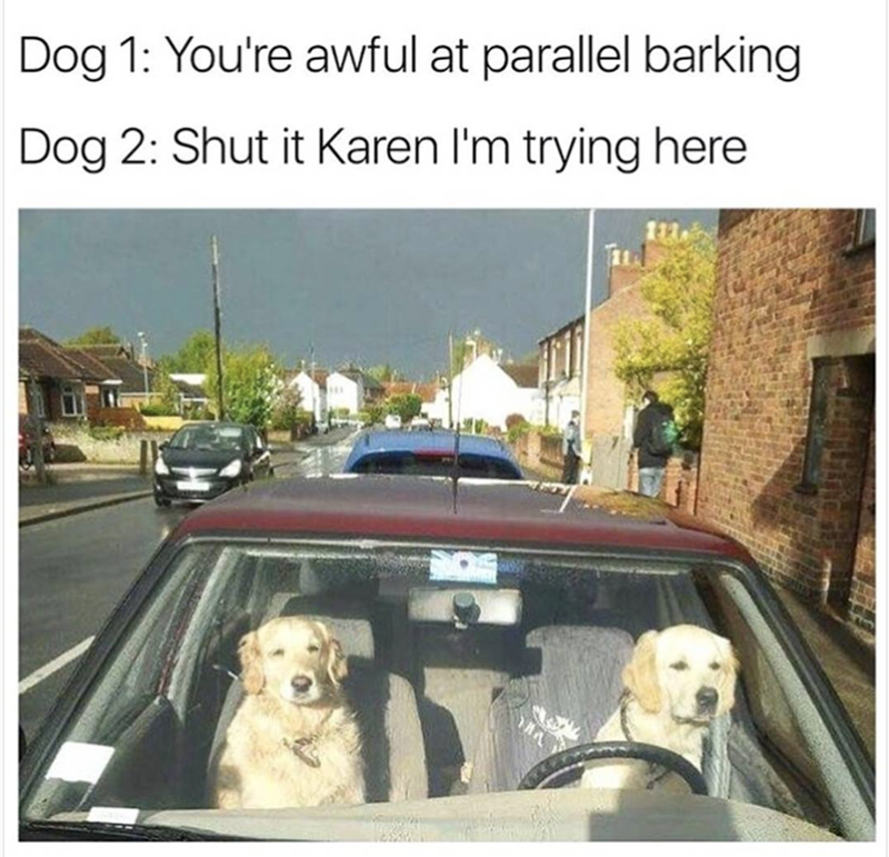 funny dog meme of trying to drive and park and the girl won't let him