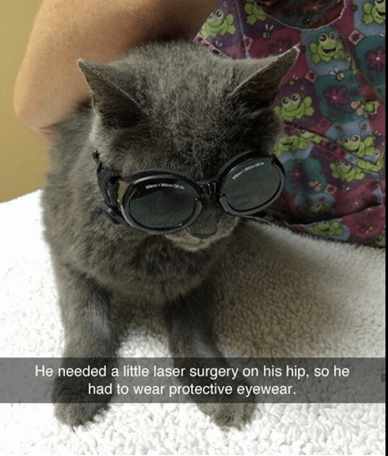 cute kitty meme of laser eye protection cat