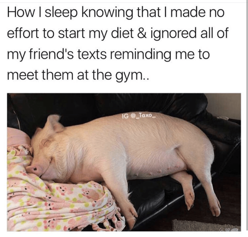 sleeping pig diet meme