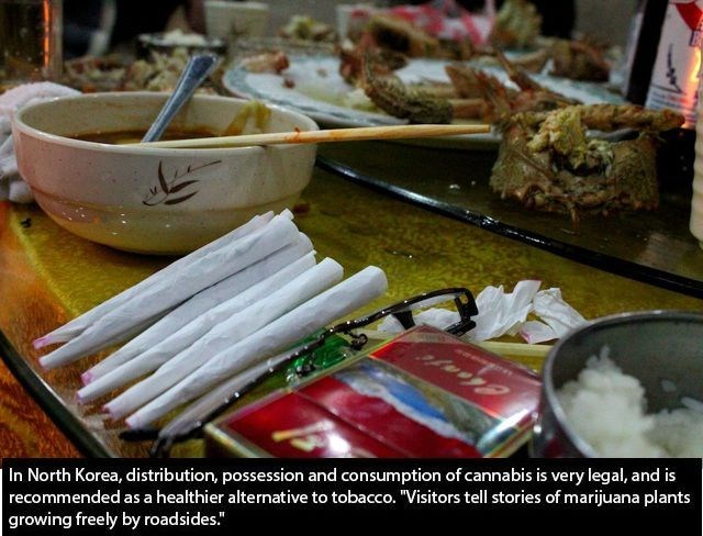 "Food - In North Korea, distribution, possession and consumption of cannabis is very legal, and is recommended as a healthier alternative to tobacco. ""Visitors tell stories of marijuana plants growing freely by roadsides."""