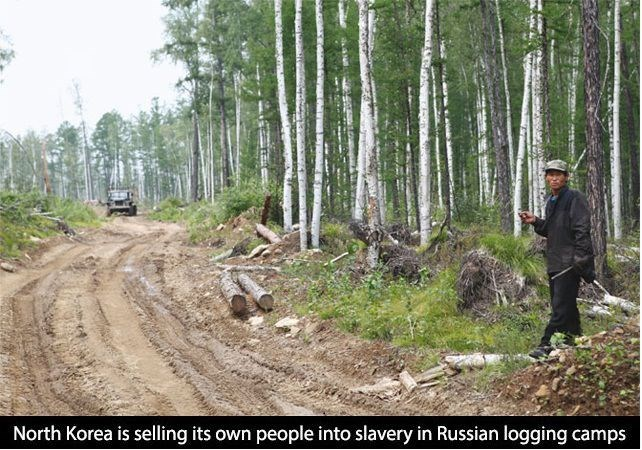 Forest - North Korea is selling its own people into slavery in Russian logging camps