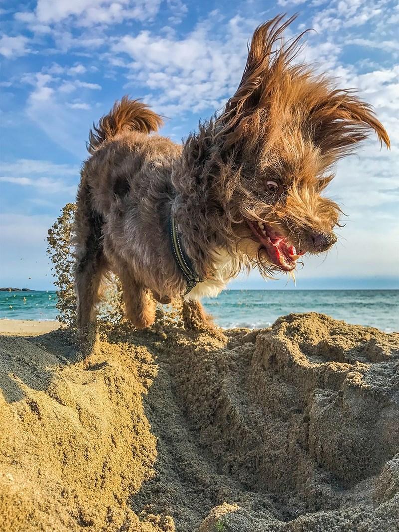 funny pet pics - Dog