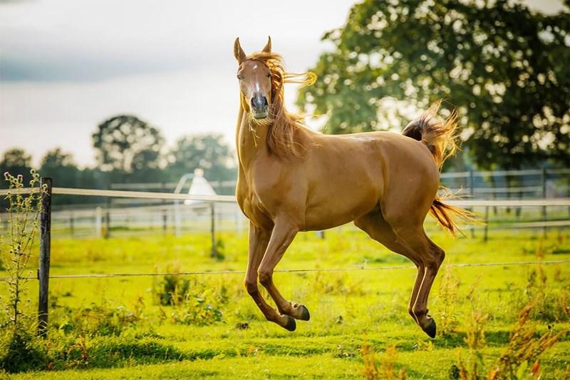 funny pet pics - Horse