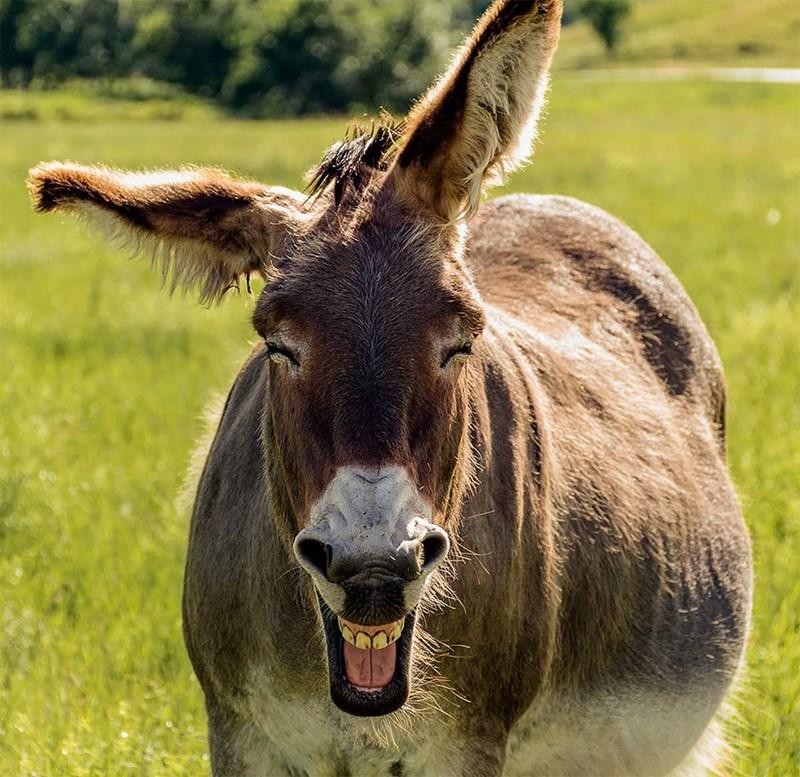 funny pet pics - Mammal