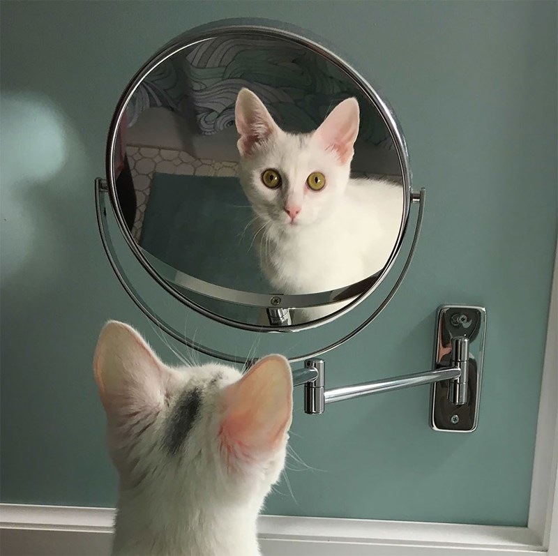 funny pet pics - Cat