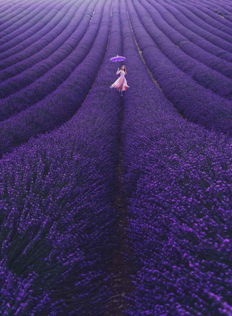 Violet fields and woman with umbrella