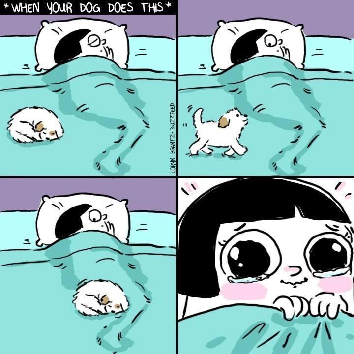 cuando tu perro se sube solo a tu cama para acostarse junto a ti