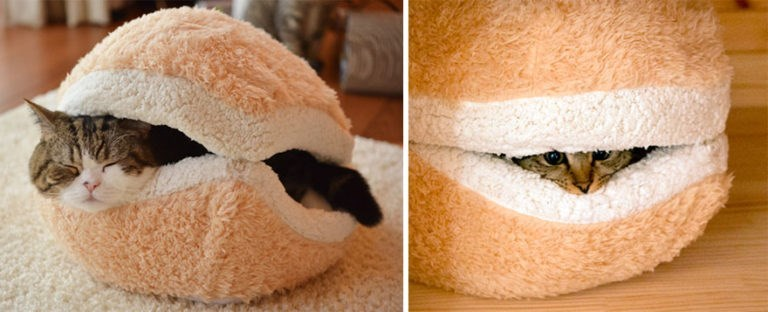 Cheezburger Image 9064401664