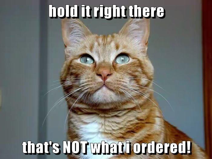 Cats Memes funny lolcats - 9064435200