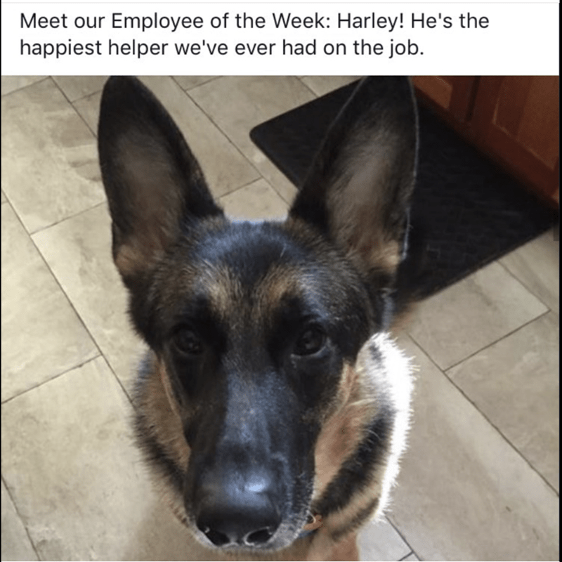 happy dog employee meme, that is not all that happy