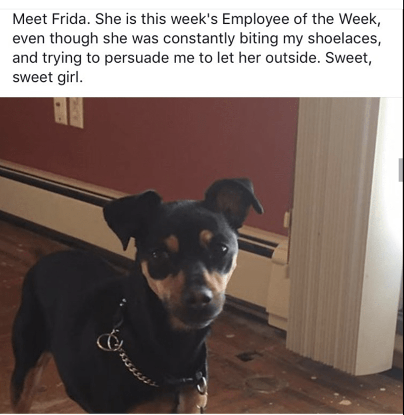Frida the employee of the week funny dog meme