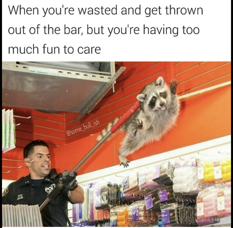 Funny meme of a racoon being captured by Animal Control about being tossed from a bar but having too much fun to care