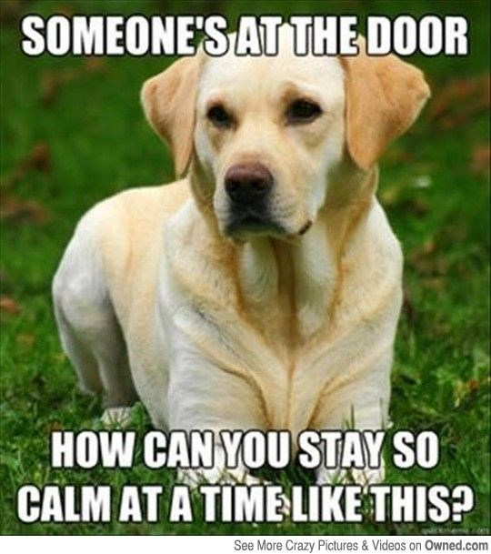 meme - Dog - SOMEONE'S AT THE DOOR HOW CAN YOU STAY SO CALM AT A TIME LIKE THIS? See More Crazy Pictures & Videos on Owned.com