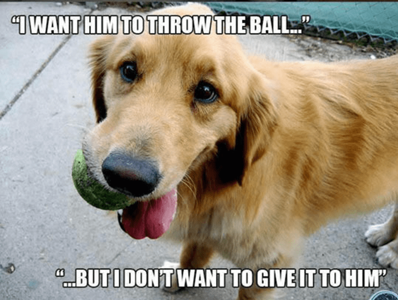 meme - Dog - TWANT HIM TO THROW THE BALL CBUTI DONT WANT TO GIVE IT TOHIM