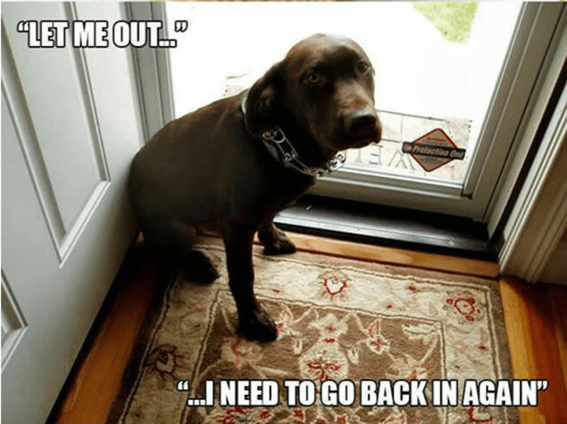 "meme - Dog - ""LET ME OUT... tection On INEED TO GO BACK IN AGAIN"""
