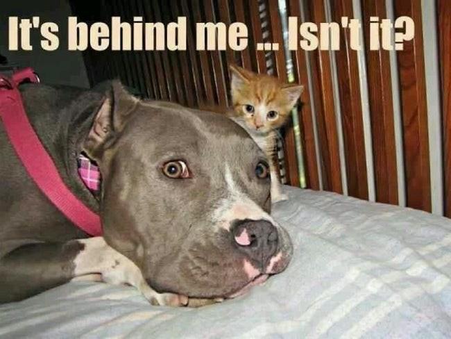 Dog - Isn't it? It's behind me