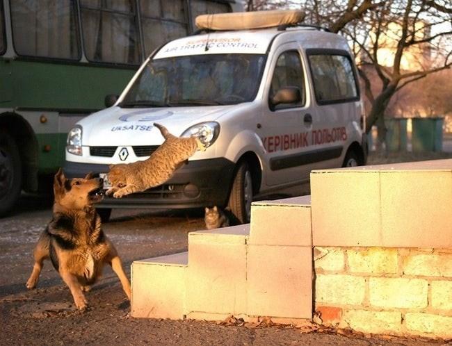 Police dog - UNSATSE VEPIВНИК ПОЛЬОТЬ
