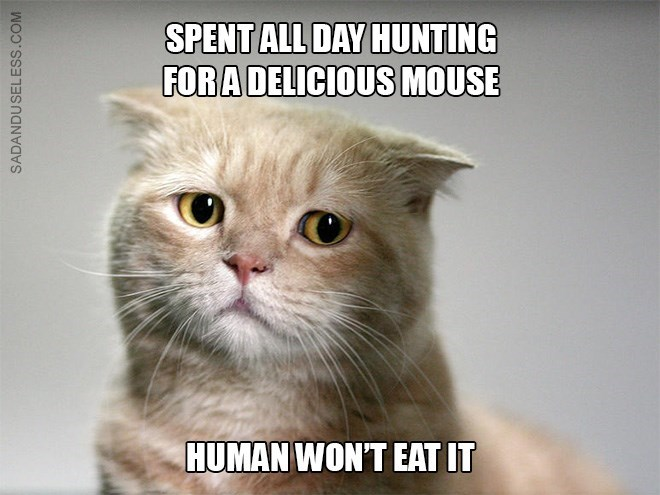 Cat - SPENT ALL DAY HUNTING FORA DELICIOUS MOUSE HUMAN WON'T EAT IT SADANDUSELESS.COM