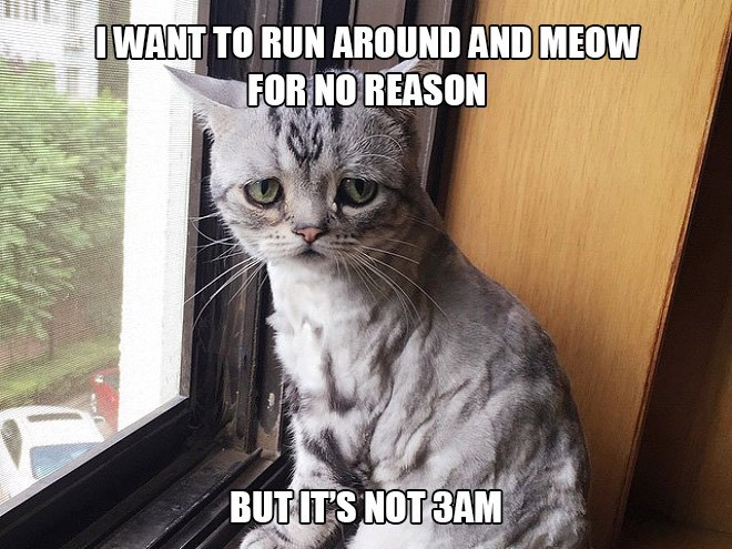 Cat - IWANT TO RUN AROUND AND MEOW FOR NO REASON BUTIT'S NOT 3AM
