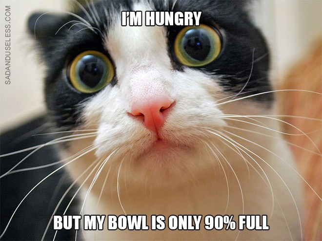 Cat - IM HUNGRY BUT MY BOWLIS ONLY 90% FULL SADANDUSELESS.COM