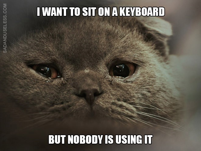 Cat - I WANT TO SIT ON A KEYBOARD BUT NOBODY IS USING IT SADANDUSELESS.COM