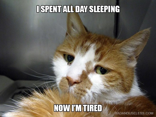 Cat - ISPENT ALL DAY SLEEPING NOW I'M TIRED SADANDUSELESS.COM