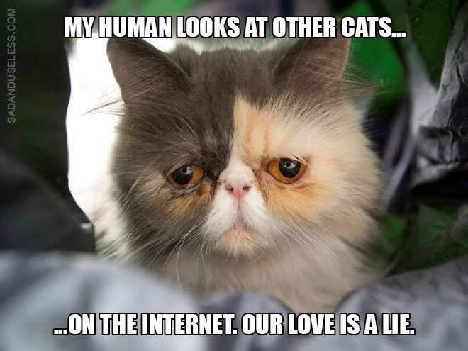 Cat - MY HUMAN LOOKS AT OTHER CATS... .ON THE INTERNET OUR LOVE IS A LIE. SADANDUSELESS.COM