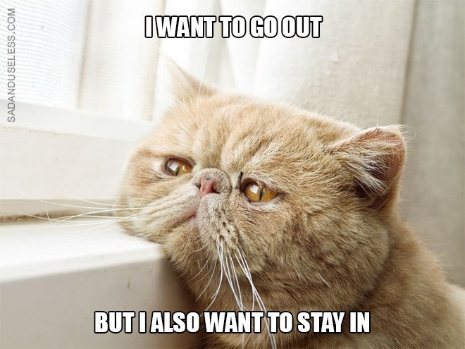 Cat - IWANT TO GOOUT BUTI ALSO WANT TO STAY IN SADANDUSELESS.COM