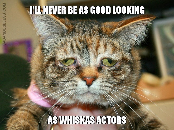 Cat - LL NEVER BE ASS GOOD LOOKING AS WHISKAS ACTORS SADANDUSELESS.COM