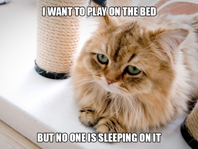 Cat - OWANT TO PLAY ON THE BED BUT NO ONE IS SLEEPING ON IT