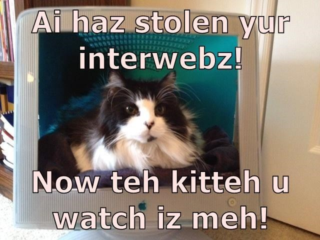 Memes funny cats - 9064803328