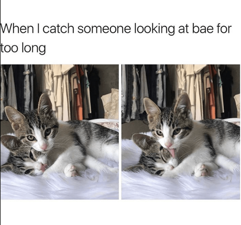 Cat - When I catch someone looking at bae for too long