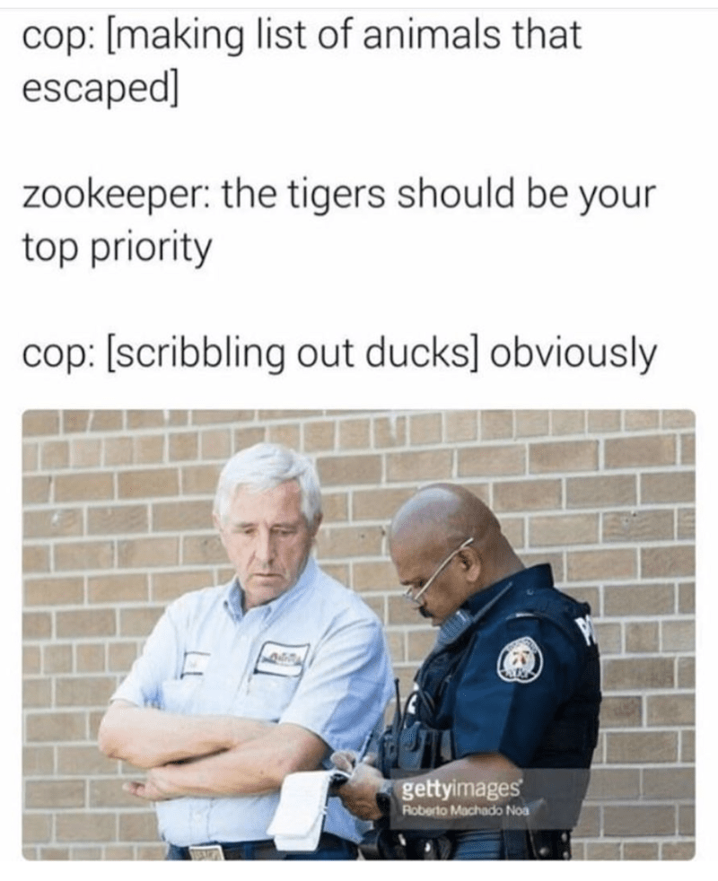 Text - cop: [making list of animals that escaped] zookeeper: the tigers should be your top priority cop: [scribbling out ducks] obviously gettyimages Roberto Machado Noa