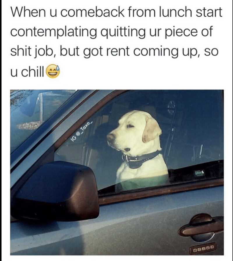 Dog - When u comeback from lunch start contemplating quitting ur piece of shit job, but got rent coming up, so u chill as IG@ Taxo