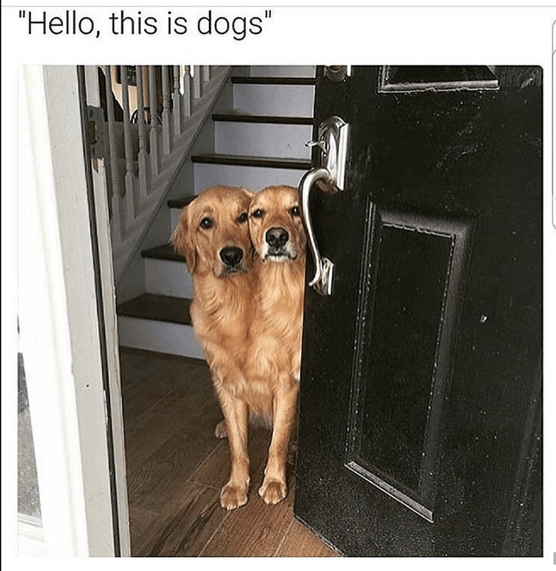 "Dog - ""Hello, this is dogs"""
