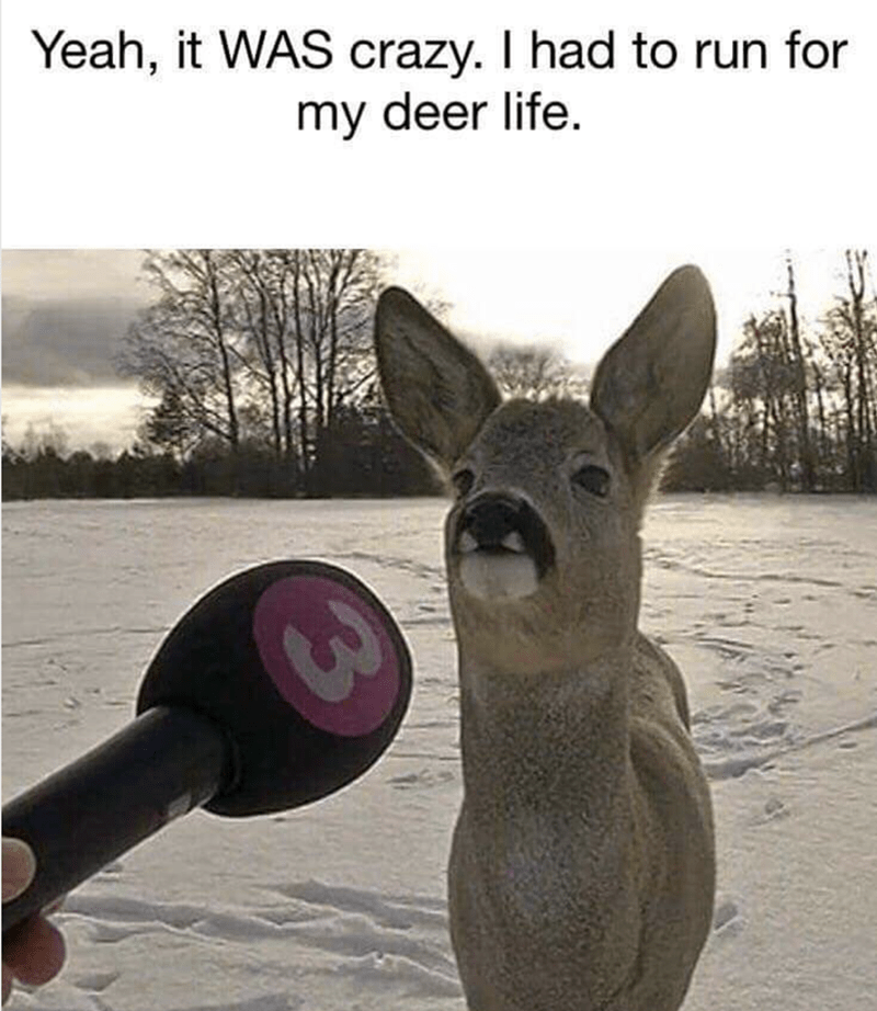 Deer - Yeah, it WAS crazy. I had to run for my deer life.