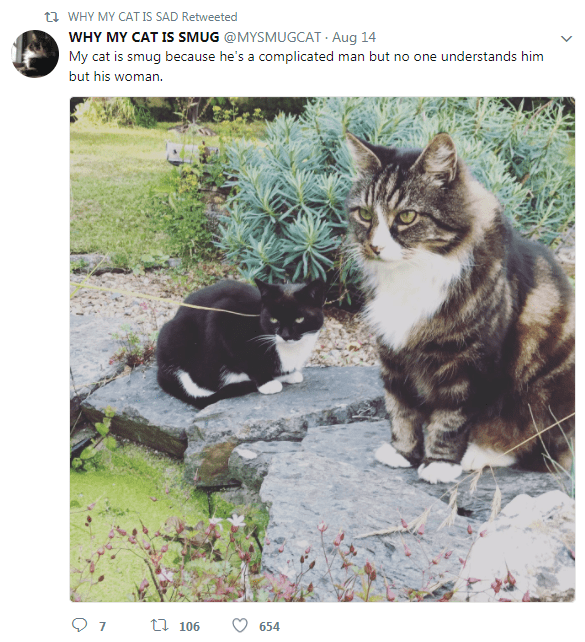Cat - t WHY MY CAT IS SAD Retweeted WHY MY CAT IS SMUG @MYSMUGCAT Aug 14 My cat is smug because he's a complicated man but no one understands him but his woman. 7 t 106 654