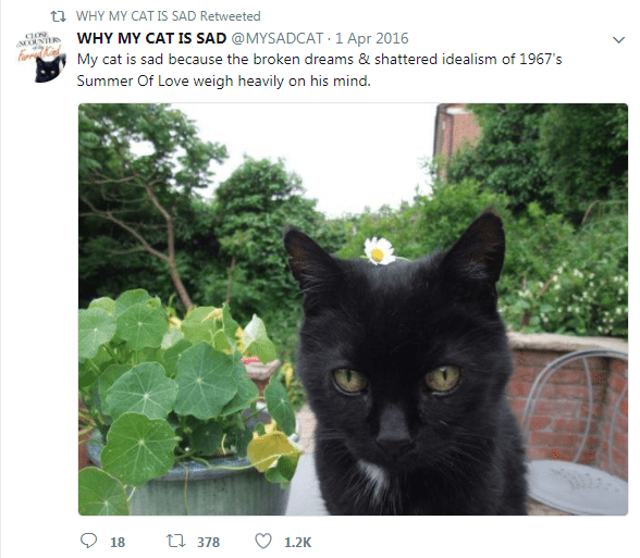 Cat - t WHY MY CAT IS SAD Retweeted WHY MY CAT IS SAD @MYSADCAT 1 Apr 2016 My cat is sad because the broken dreams & shattered idealism of 1967's Summer Of Love weigh heavily on his mind. ti 378 18 1.2K