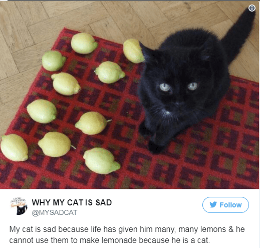 Cat - HER H Follow WHY MY CAT IS SAD @MYSADCAT My cat is sad because life has given him many, many lemons & he cannot use them to make lemonade because he is a cat.