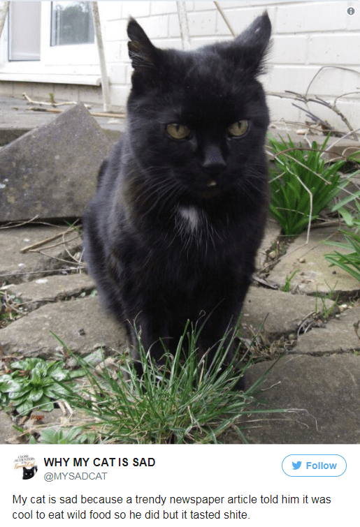 Cat - WHY MY CAT IS SAD Follow @MYSADCAT My cat is sad because a trendy newspaper article told him it was cool to eat wild food so he did but it tasted shite