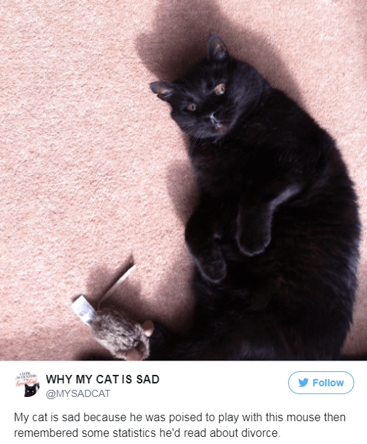 Cat - WHY MY CAT IS SAD Follow @MYSADCAT My cat is sad because he was poised to play with this mouse then remembered some statistics he'd read about divorce.