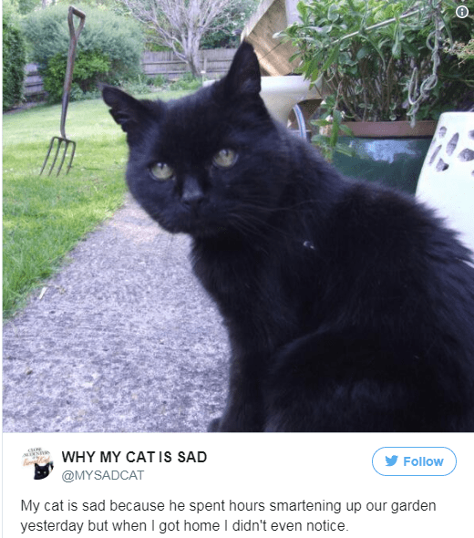 Cat - MIN WHY MY CAT IS SAD Follow @MYSADCAT My cat is sad because he spent hours smartening up our garden yesterday but when I got home I didn't even notice.