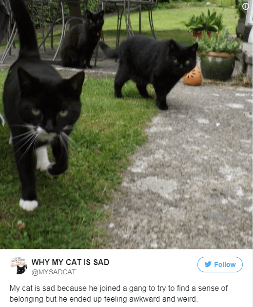 Cat - WHY MY CATIS SAD Follow @MYSADCAT My cat is sad because he joined a gang to try to find a sense of belonging but he ended up feeling awkward and weird.