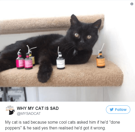 """Cat - WHY MY CATIS SAD Follow @MYSADCAT My cat is sad because some cool cats asked him if he'd """"done poppers"""" & he said yes then realised he'd got it wrong."""