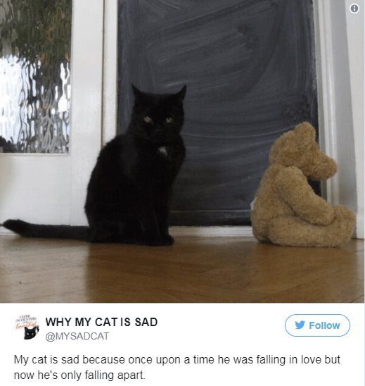Cat - WHY MY CAT IS SAD Follow @MYSADCAT My cat is sad because once upon a time he was falling in love but now he's only falling apart.