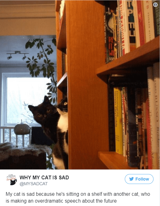 Shelving - WHY MY CAT IS SAD Follow @MYSADCAT My cat is sad because he's sitting on a shelf with another cat, who EOTLAN ieAra AND RDmNSON JOHN RIDLEY Fetrormania SimoY evrIolds www.w