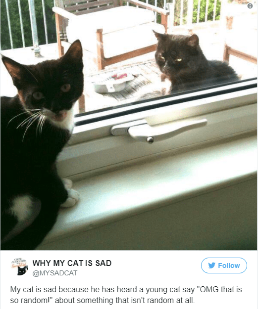"""Cat - WHY MY CAT Is SAD Follow @MYSADCAT My cat is sad because he has heard a young cat say """"OMG that is so random!"""" about something that isn't random at all."""