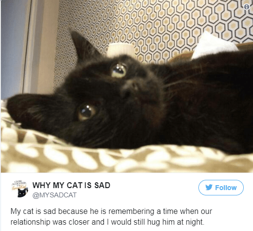 Cat - WHY MY CAT Is SAD Follow @MYSADCAT My cat is sad because he is remembering a time when our relationship was closer and I would still hug him at night
