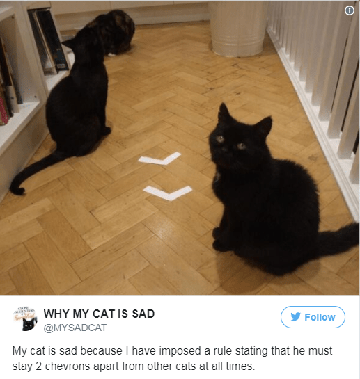 Cat - WHY MY CAT Is SAD Follow @MYSADCAT My cat is sad because I have imposed a rule stating that he must stay 2 chevrons apart from other cats at all times