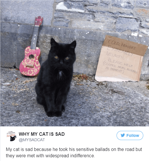 Cat - COLD. HUNGRY EXIREMELY NEUROC PLEASE HELP CCOPED As PAMENT MEATS ACCERTED Follow WHY MY CAT IS SAD @MYSADCAT My cat is sad because he took his sensitive ballads on the road but they were met with widespread indifference.